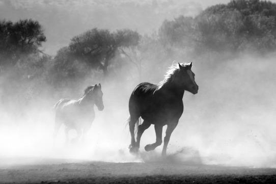 horse-430441_1280